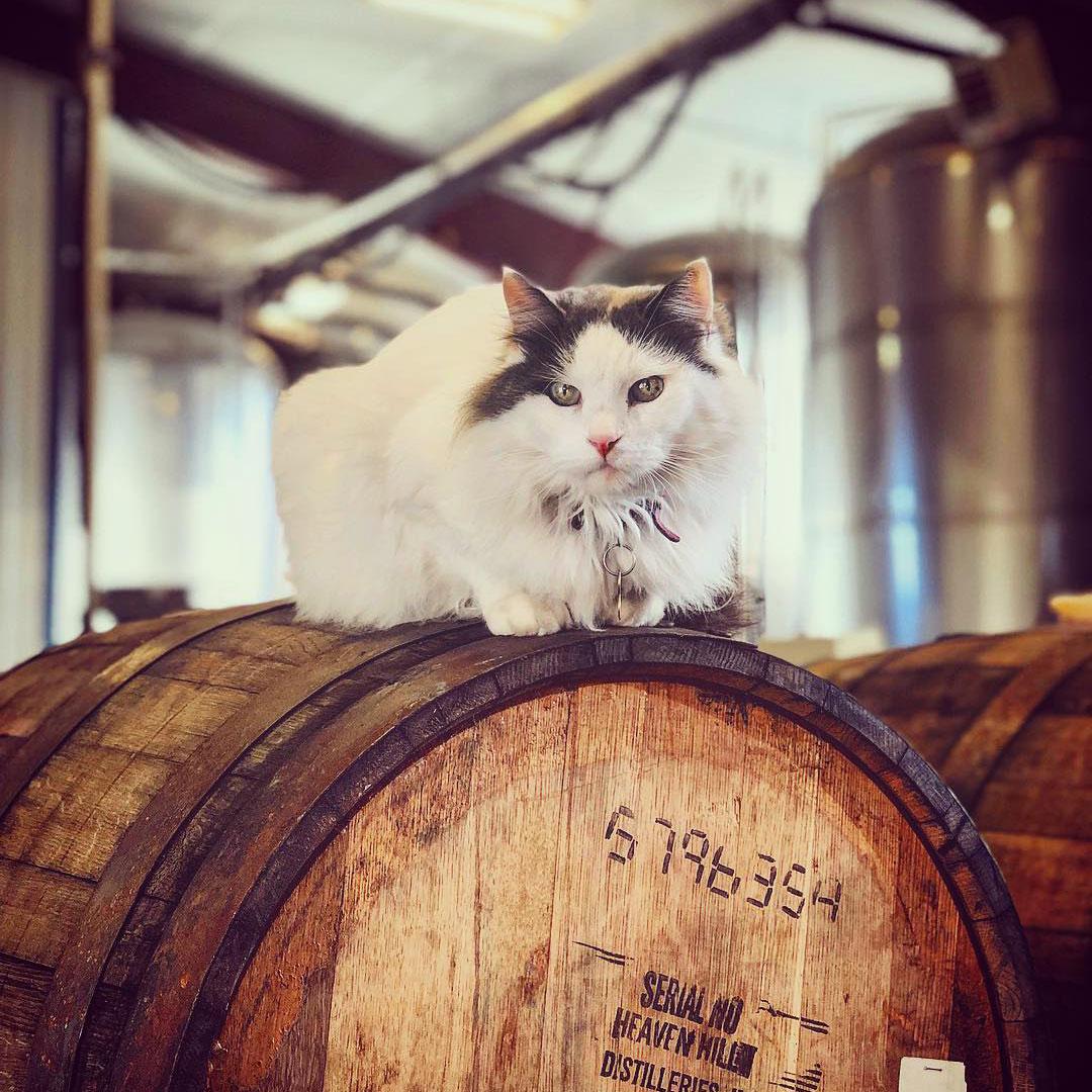 Grand Teton Brewing Cat